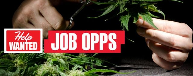DPA Report: Employment Rates Rise Due to CO Cannabis Legalization | Weedist