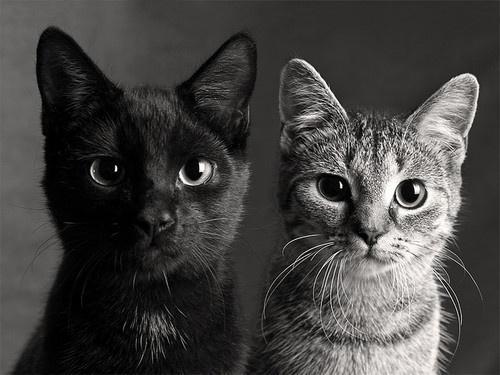 : Cats, Friends, Black And White, Black White, Kittens, Kitty, Black Cat, Animal, White Cat