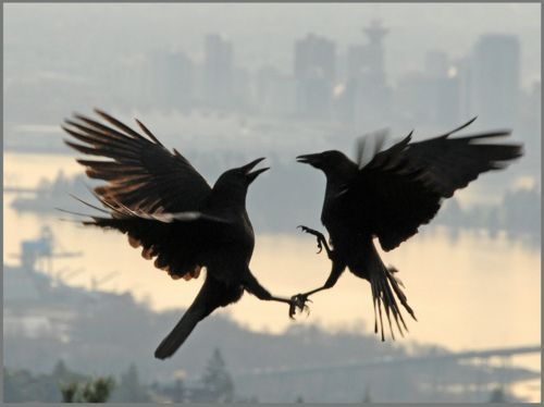 And the crows shall dance while justice is met! So mote it be!