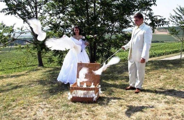 Esküvői fehérgalamb röptetés, Tarcal [Pepita Hirdető]