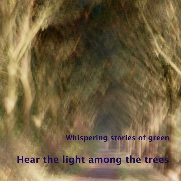 The warm sunlight rustles through the leaves of the trees, as if it is playing hide and seek with itself. 'Hear the light among the trees' is a photo in the series 'Whispering sto…