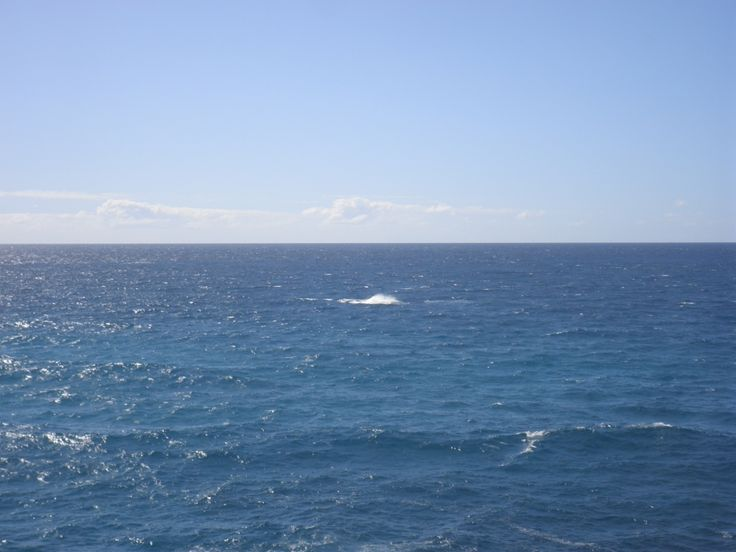 The splash after a humpback whale breached off Point Lookout.