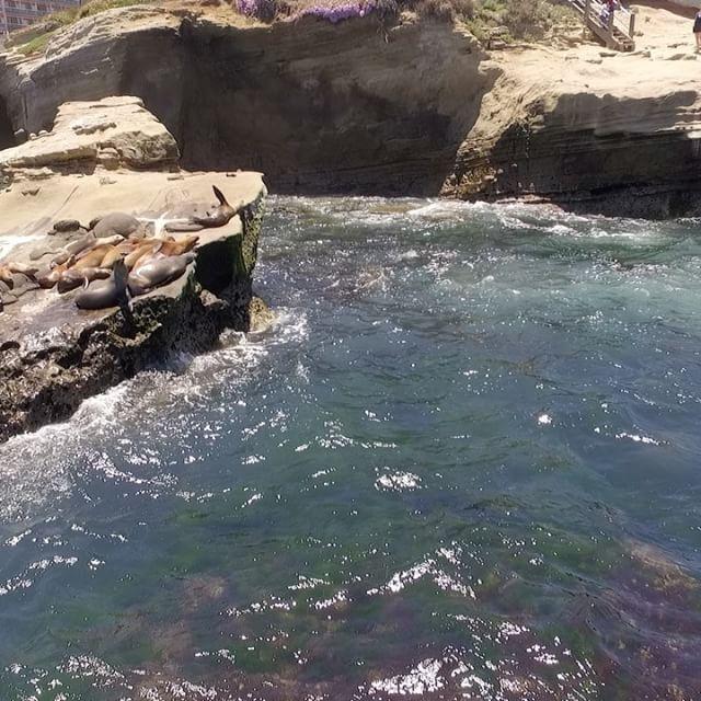 Sea lions and seals 🇪🇸Leones marinos y focas #seals #sealion #lajolla #drone #djiphantom3 #lajollalocals #sandiegoconnection #sdlocals - posted by Francisco Sanchez  https://www.instagram.com/fran_sanchez0587. See more post on La Jolla at http://LaJollaLocals.com