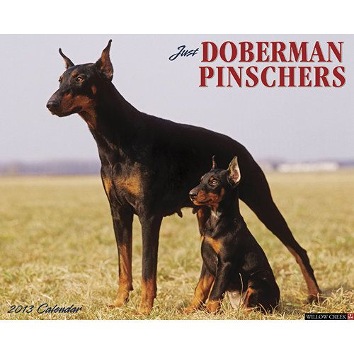 Just Doberman Pinschers Wall Calendar: Strong, sleek and powerful Doberman Pinschers make perfect companions and guardians. Their shiny elegance and nobility are embodied in these twelve stunning, full-color photographs.  $13.99  http://calendars.com/Doberman/Just-Doberman-Pinschers-2013-Wall-Calendar/prod201300002964/?categoryId=cat00242=cat00242#