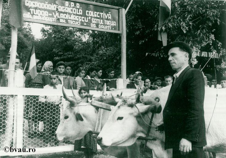 """Înfiinţarea Cooperativei Agricole de Producție din satul Toflea, Galati, Romania. Imagine din colecțiile Bibliotecii Județene """"V.A. Urechia"""" Galați."""