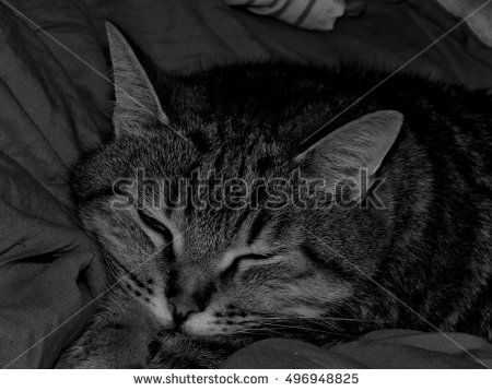 Pet on a black and white image