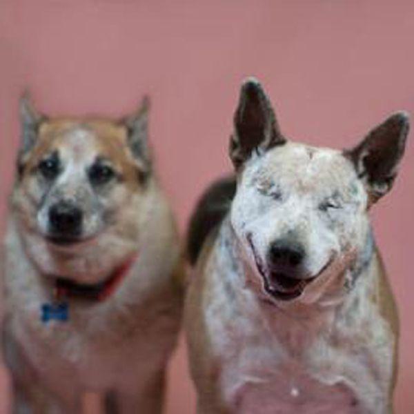 Seeing Eye Dogs Adoption Florida