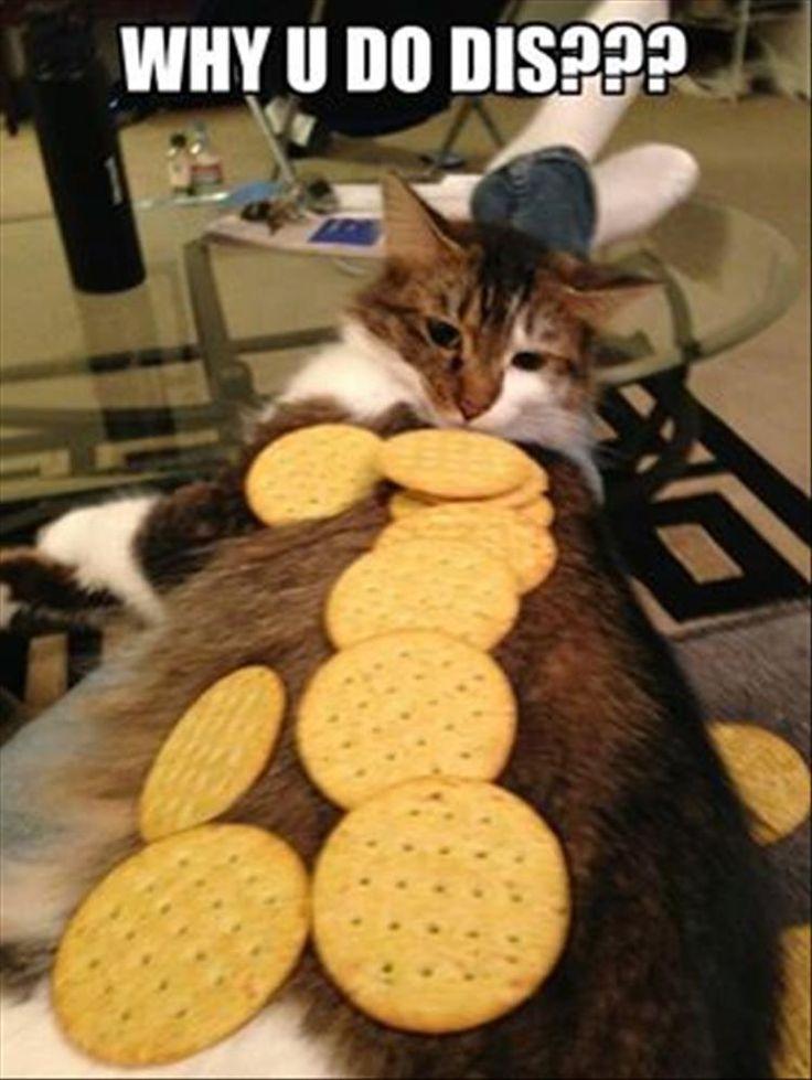 Cat training - difficult.