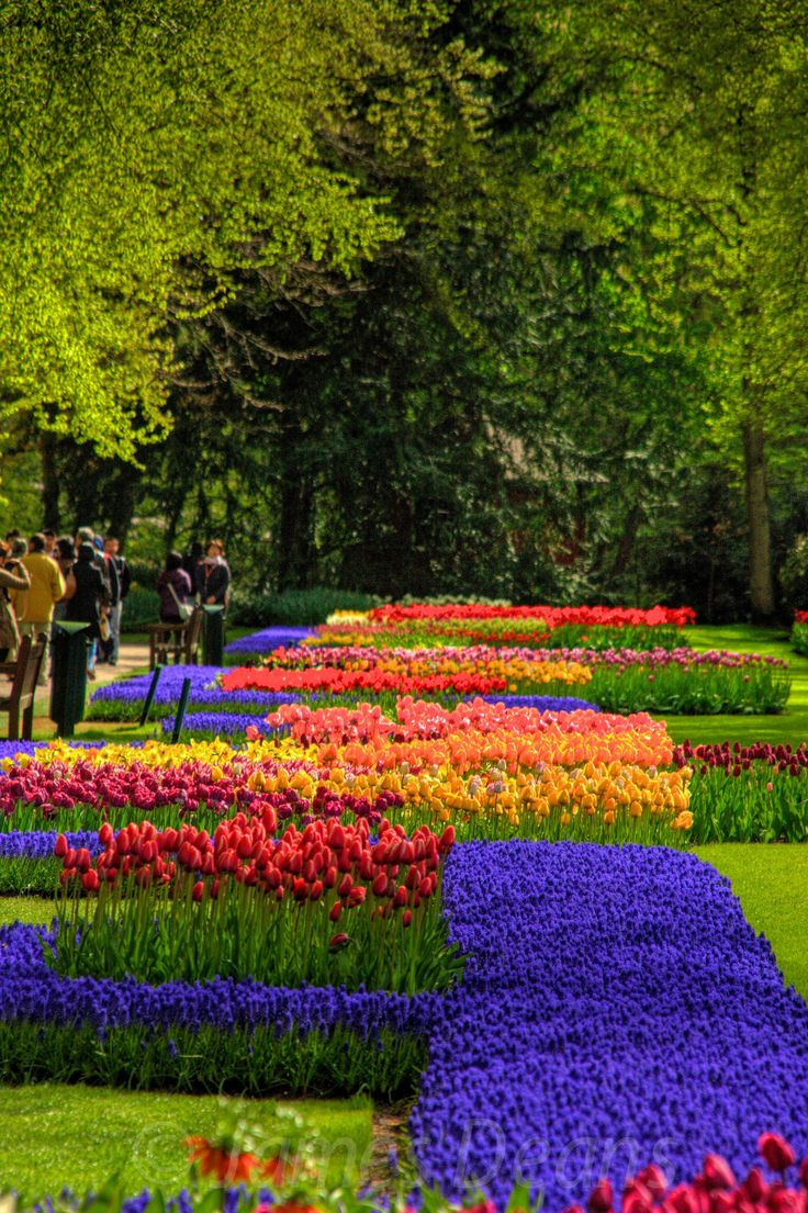 596 Best Images About Spring Gardens On Pinterest