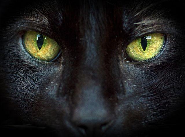 cat eyes   cat's eyes   Flickr - Photo Sharing!