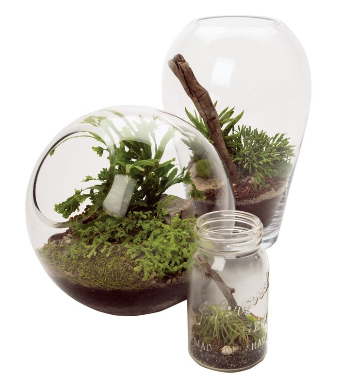 Miniature Landscapes: Terrariums from New Inglewood Store Plant