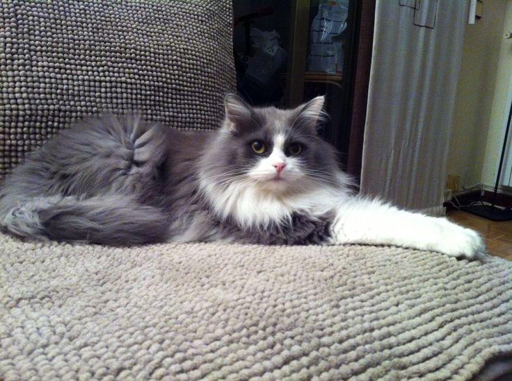 Lucas, tan agustito en su sofá, tyodo para él!
