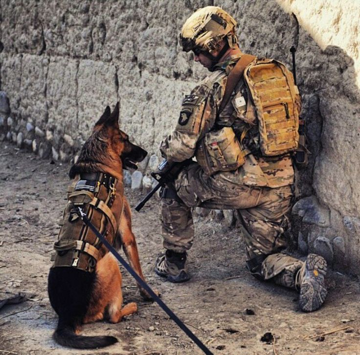 So proud of our people in uniform & the dogs that also do there service for our country. God bless them all. God Bless America