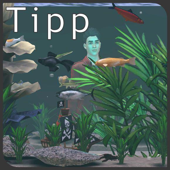 die besten 25 gro es aquarium ideen auf pinterest aquarium aquarium design und aquascaping. Black Bedroom Furniture Sets. Home Design Ideas