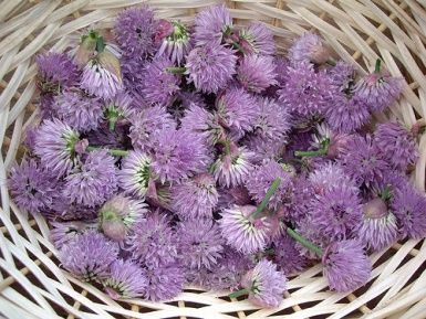Spring Cleaning: Spring Clean, Herbs, Preserves Edible, Hair Stand, Simple Recipes, Red Clovers, Healthy Food, Weights Loss, Edible Flowers