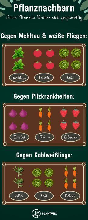Hochbeet: Fruchtfolge & schädlingsvertreibende Pflanzen