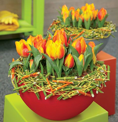 tulips wrapped with bound sticks
