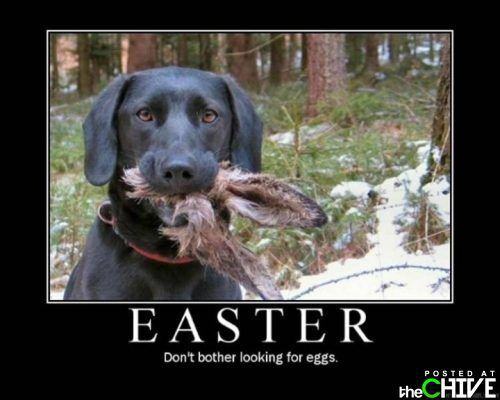 Happy Easter Funny | funny easter photos 12 Happy Easter!!! (41 Photos)
