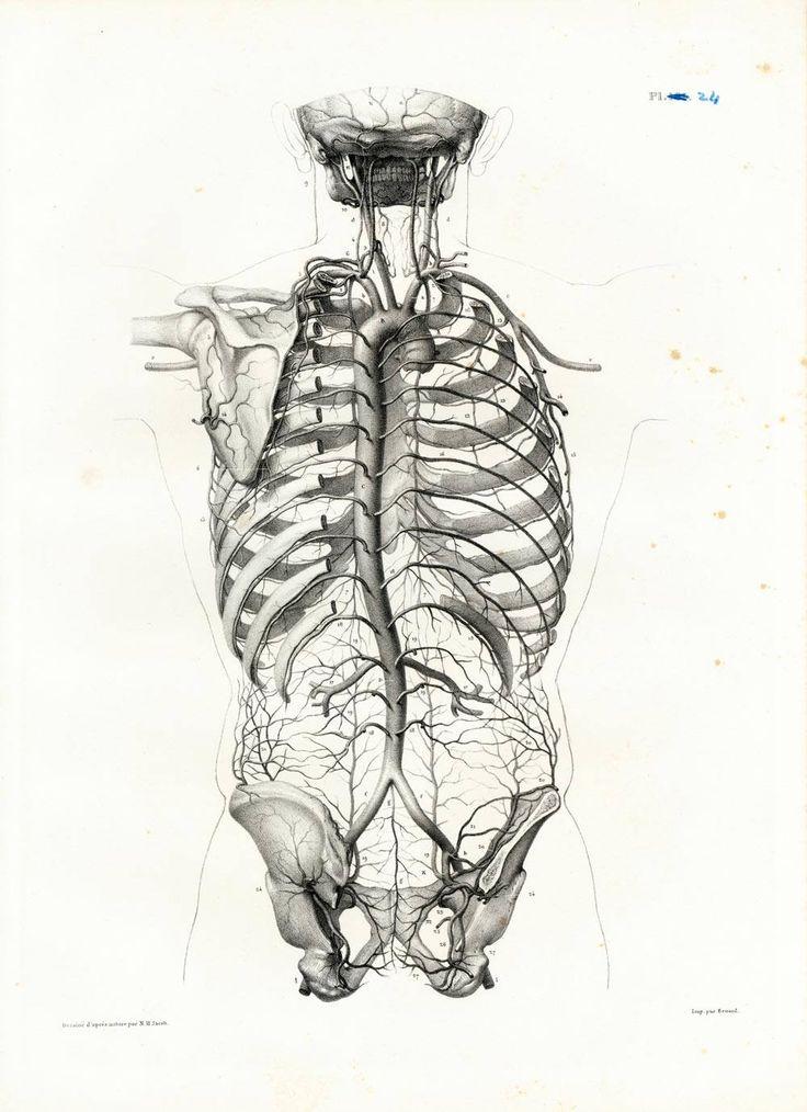 1836 Vintage Arteries Veins Vascular System Print, Anatomy illustration Poster B… 0f5fc175552035045c4fec8c47f89ec4