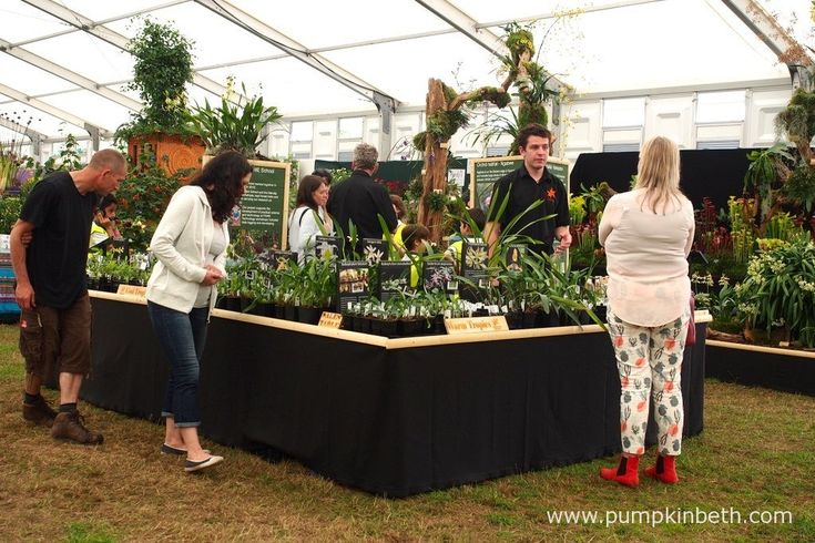 Jacob Coles giving advice on orchids to visitors at the RHS Hampton Court Palace…