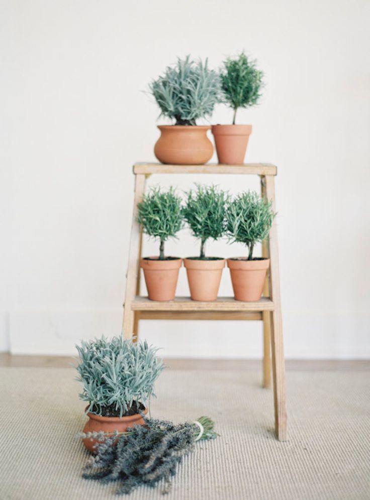 36 best interior design plants images on pinterest for Design indoor herb garden