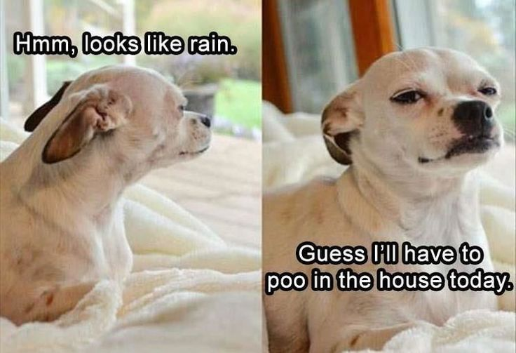 Funny Pictures For Today (#140)