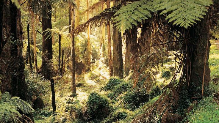 Sherbrooke Forest, Yarra Valley and Dandenong Ranges, Victoria, Australia