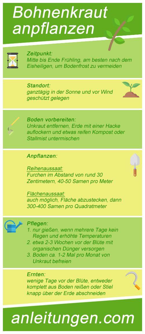 Bohnenkraut anpflanzen - Alles was wissen muss, wenn man Bohnenkraut anpflanzen möchte, findest du in dieser Infografik- Tipps zu Standort sowie Zeitpunkt, Pflegehinweise und vieles mehr.