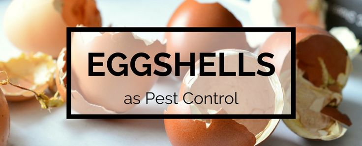 Crush eggshells into small pieces and sprinkle them on top of the soil. Slugs, cutworms, and other insects are put off by the crunch when they crawl over the sharp edges and will leave for softer p…
