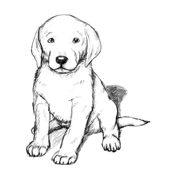 Golden Retriever Coloring Pages In 2020