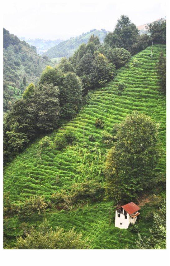Ardaşen'in bir köyünden bir kare… Bu kare İsviçre Alplerinde bir köyden diye paylaşsam eminim ki beğeni rekoru kırar. Bu güzel kare bize yani ülkemize ait bir yerden yani Rize'nin Ardeşen ilçesine bağlı bir köyüne ait… Karadeniz yeşili, deresi ve insan eli değmemiş tabiatı ile gerçekten güzel ve insana huzur veriyor. Özellikle bölgeye hakim noktalardan genel bir görünümü izlemek ayrı bir keyif…