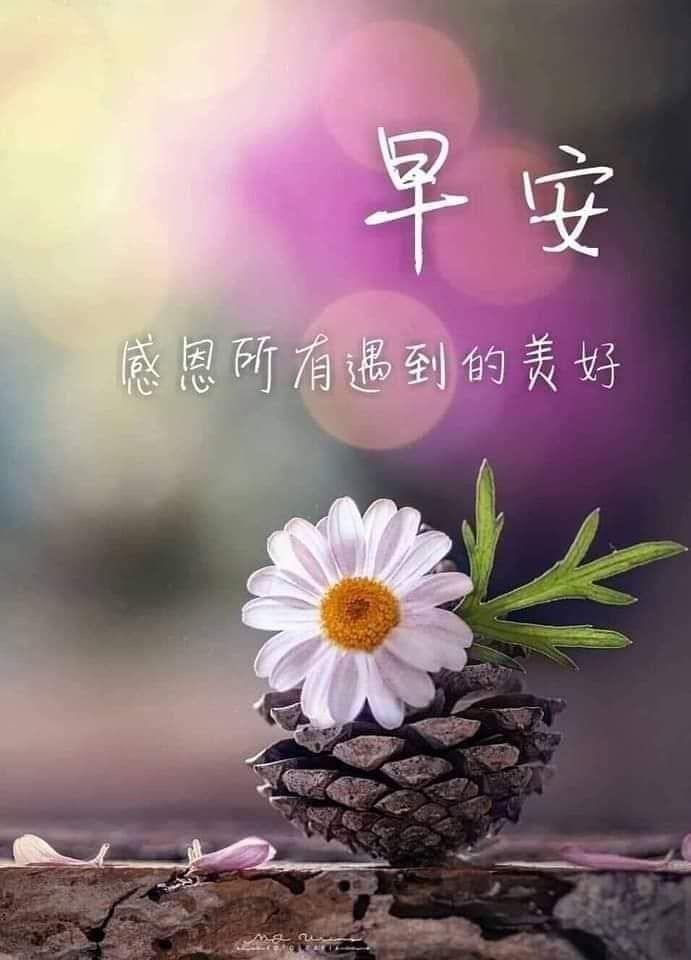 Pin by Cherry Huang on Morning/ 早安/午安   Good morning greetings ...