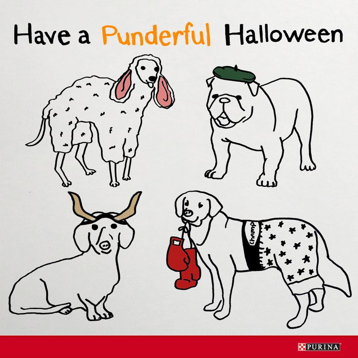 What's better than a dog Halloween costume? A funny dog Halloween costume!