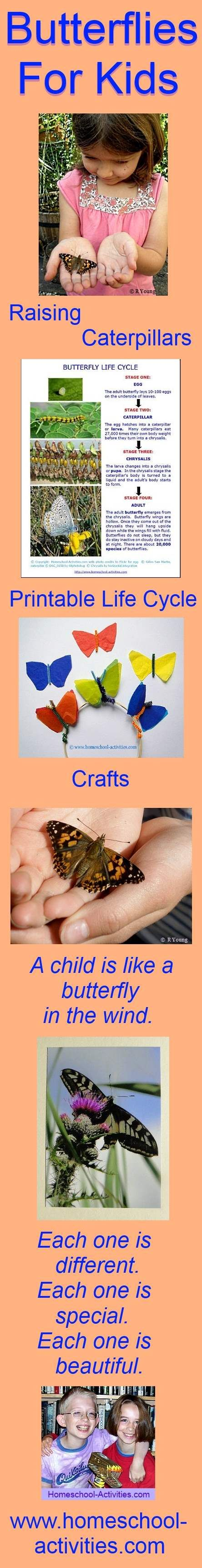 25 Best Ideas about Butterfly Facts For Kids on Pinterest