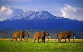 Mt. Kilimanjaro - rising 5895m above sea level it is an overpowering symbol of the beauty and wildness of East Africa. Situated in Kilimanjaro National park in Northern Tanzania.