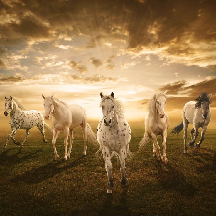Download White-horses Samsung Galaxy Y S5360 HD Wallpapers