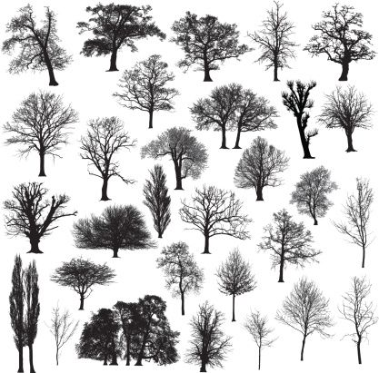 Vectores libres de derechos: Winter tree silhouette collection
