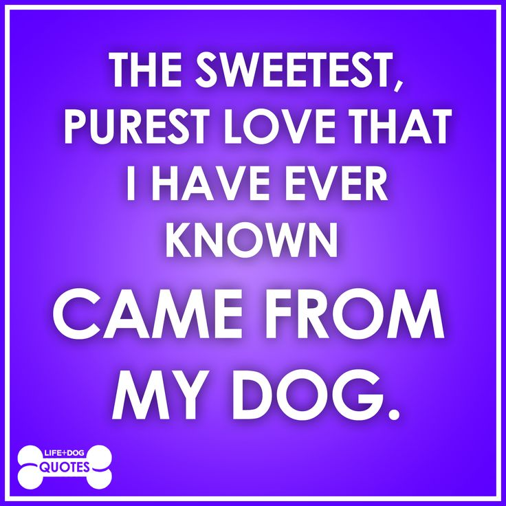 My Dog Loves Me Quotes: My Dog & Related Quotes