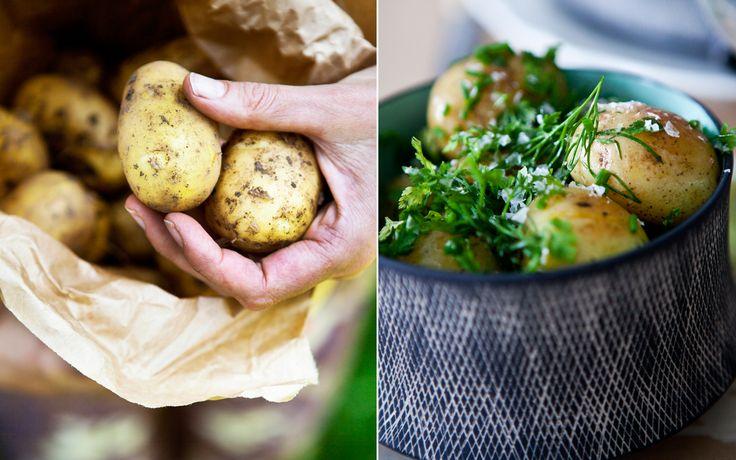 nye kartofler, opskrifter, sommermad