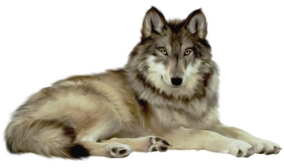 Transparent Wolf Clipart