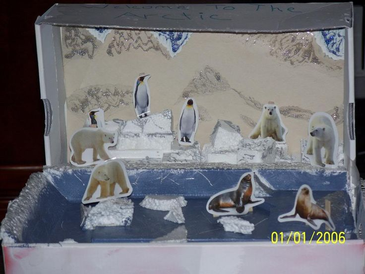 Jeffrey's Polar Bear Diorama 2 Photo: This Photo was uploaded by DMWalker1980. Find other Jeffrey's Polar Bear Diorama 2 pictures and photos or upload y...