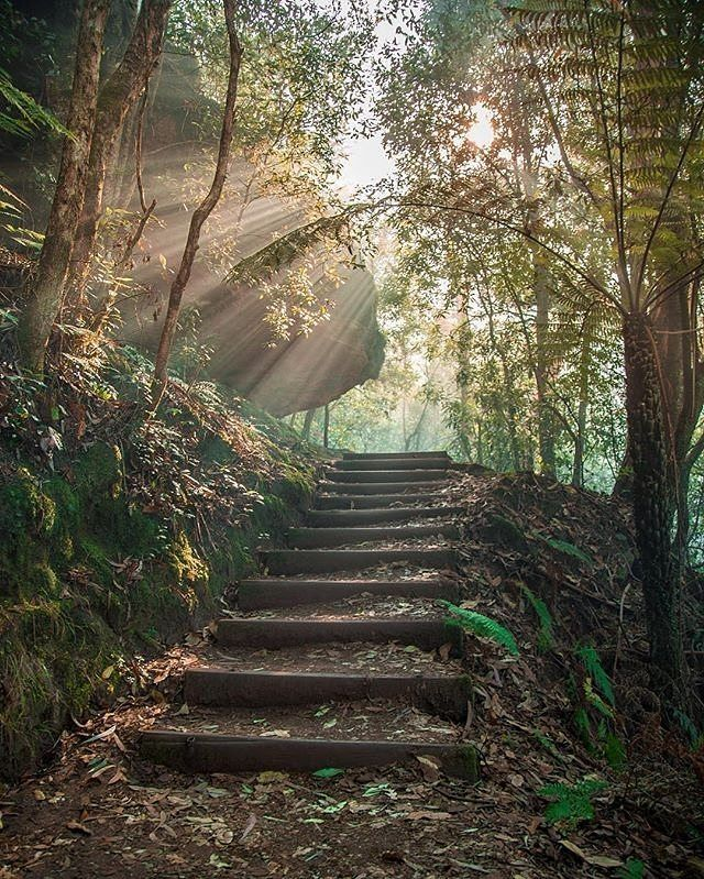 Now doesn't this look like an intriguing set of stairs!You'll find this enchanting forest in the @bluemountainsaustralia, which is just a short drive from @visitnsw's capital city of @sydney. It may surprise you to know that there are actually heaps of pockets of temperate rainforest in the #BlueMountains, so you can be hiking through typical dry scrub and eucalypt trees, then you can suddenly find yourself surrounded by ancient ferns and tumbling waterfalls. Photo: @enursvendse