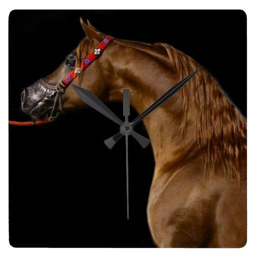60 Best Lipizzan Horses Images On Pinterest Wall Clocks