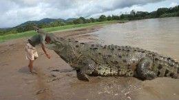 Alligators Attacks Caught On Tape – Alligator Attacks Humans Compilation