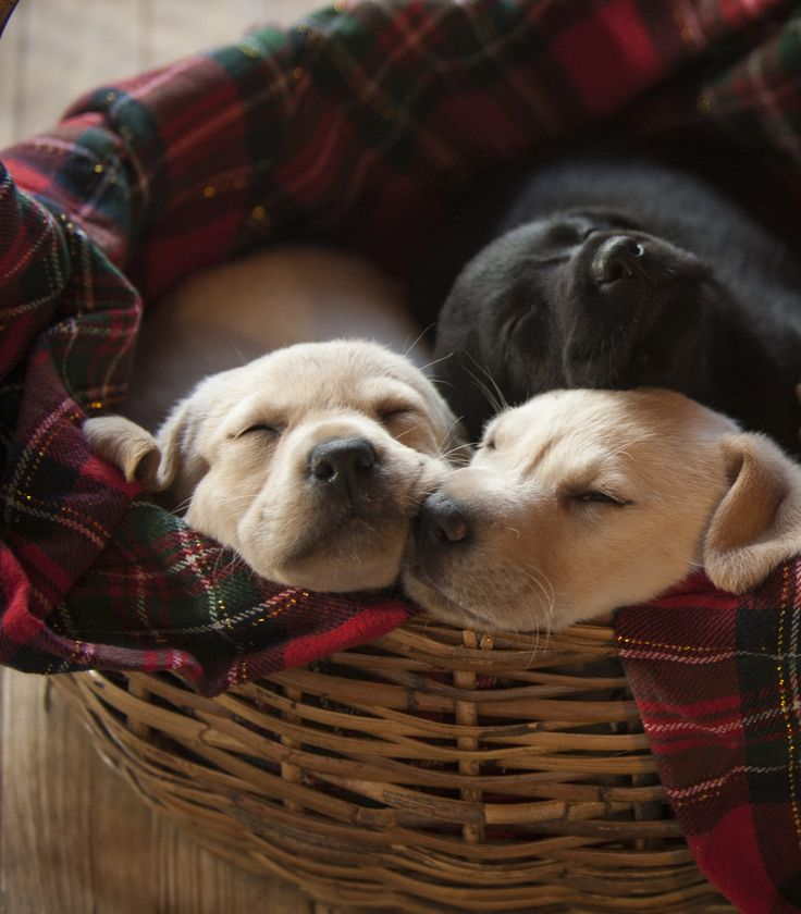 Sleeping puppies by Carrie Dodt on 500px
