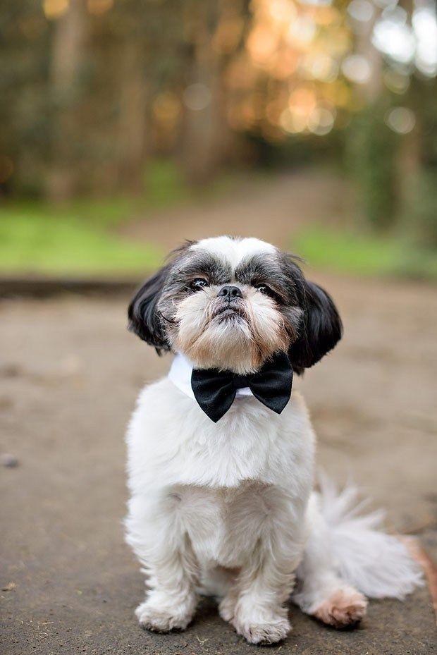 30 Lovely Wedding Pets For Your Wedding Wedding Pets San Francisco Engagement Dog Wedding