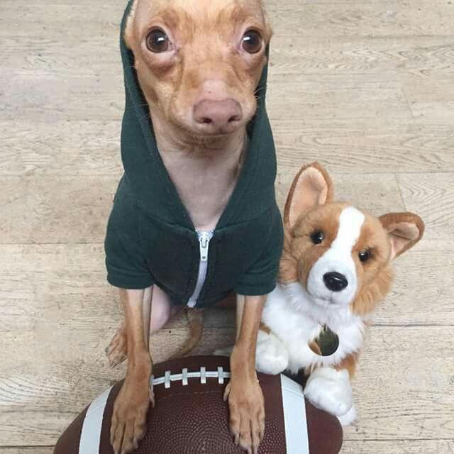 "Tuna looking forward to the ""Doggie Bowl""! I love Tuna! ❤ ❤ ❤"