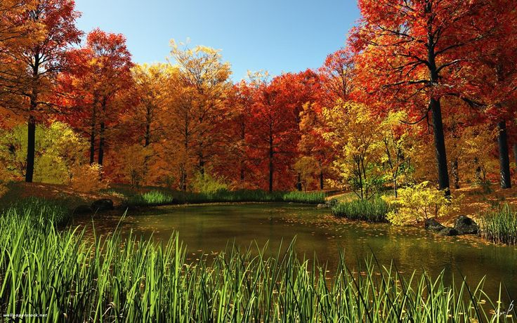 Pond autumn red leaves forest nature beauty lake wallpaper ...