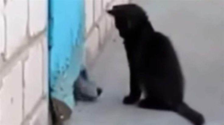 Den här filmen spelades in längs en väg där många människor går varje dag. Men ingen hade hört hunden som försökte få uppmärksamhet. Den hade fastnat bakom dörren, inne på en byggarbetsplats. Men katten hörde hunden – och blev dagens hjälte när den kröp in och visade vägen ut. Vilket bevis på vilken den omtanke och intelligens som finns hos våra små vänner.
