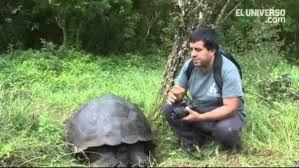 Identifican Una Nueva Especie De Tortuga Gigante En Galápagos